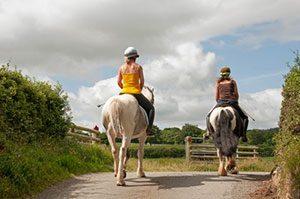Tierhalterhaftung Pferde