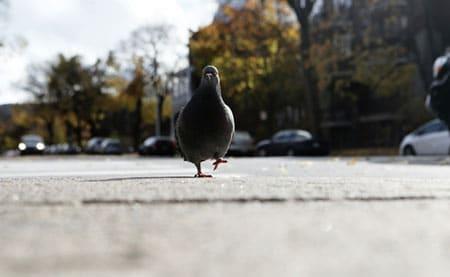 bremsen auch für Tauben